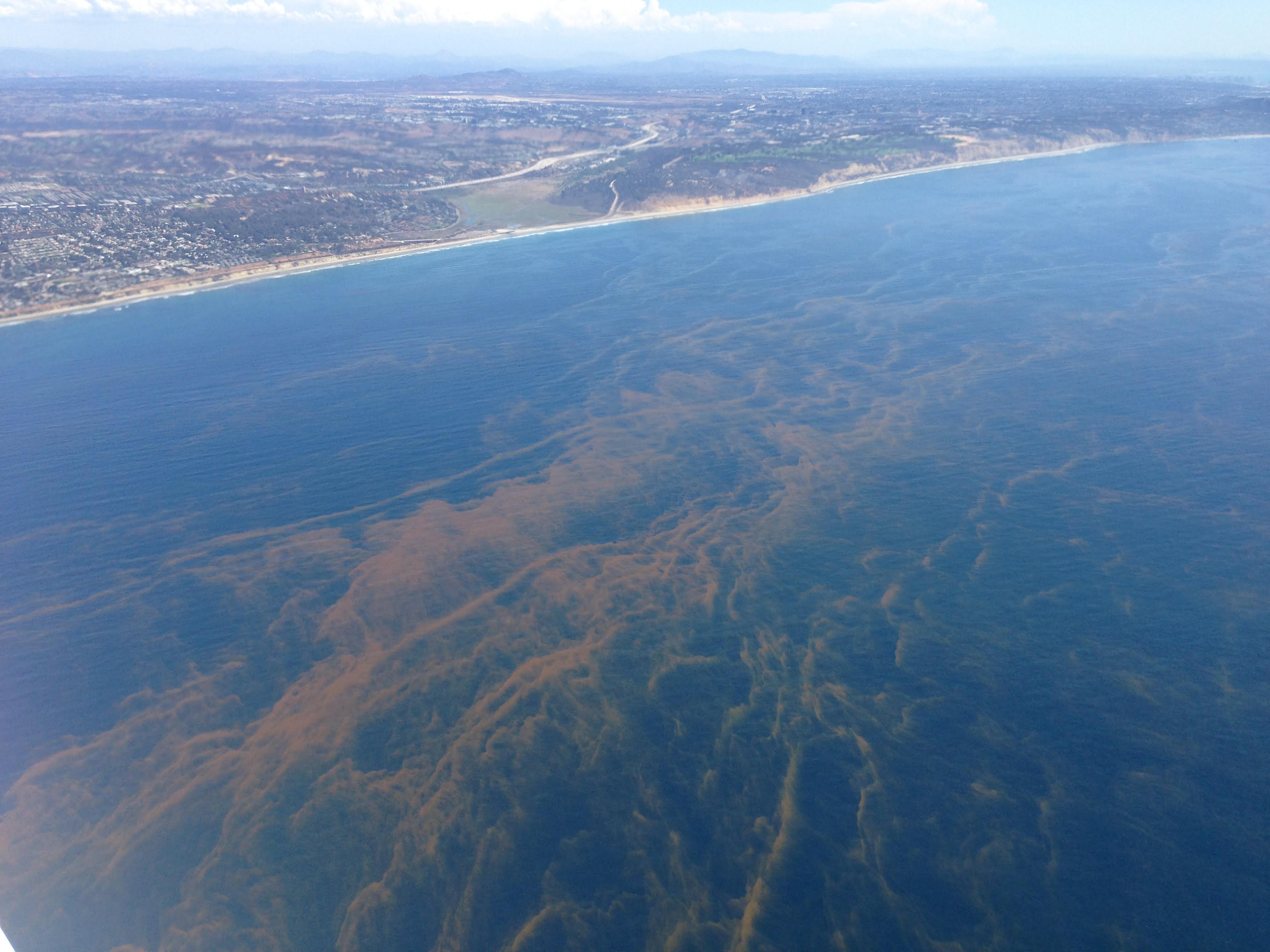 This photograph was taken looking southeast toward San Diego, CA, at the location of the study. The patterns in the water are bands of phytoplankton that formed during a red tide.